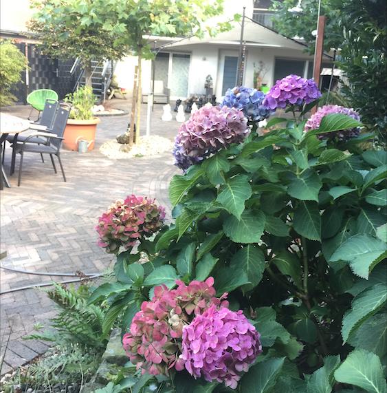 pflanzen Villa